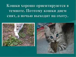 Кошки хорошо ориентируются в темноте. Поэтому кошки днем спят, а ночью выходя
