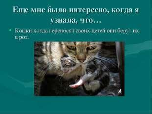 Еще мне было интересно, когда я узнала, что… Кошки когда переносят своих дете