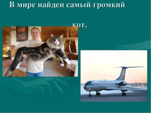 В мире найден самый громкий кот.