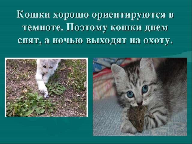 Кошки хорошо ориентируются в темноте. Поэтому кошки днем спят, а ночью выходя...