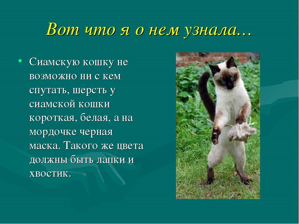 Вот что я о нем узнала… Сиамскую кошку не возможно ни с кем спутать, шерсть у...