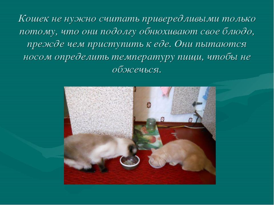 Кошек не нужно считать привередливыми только потому, что они подолгу обнюхива...
