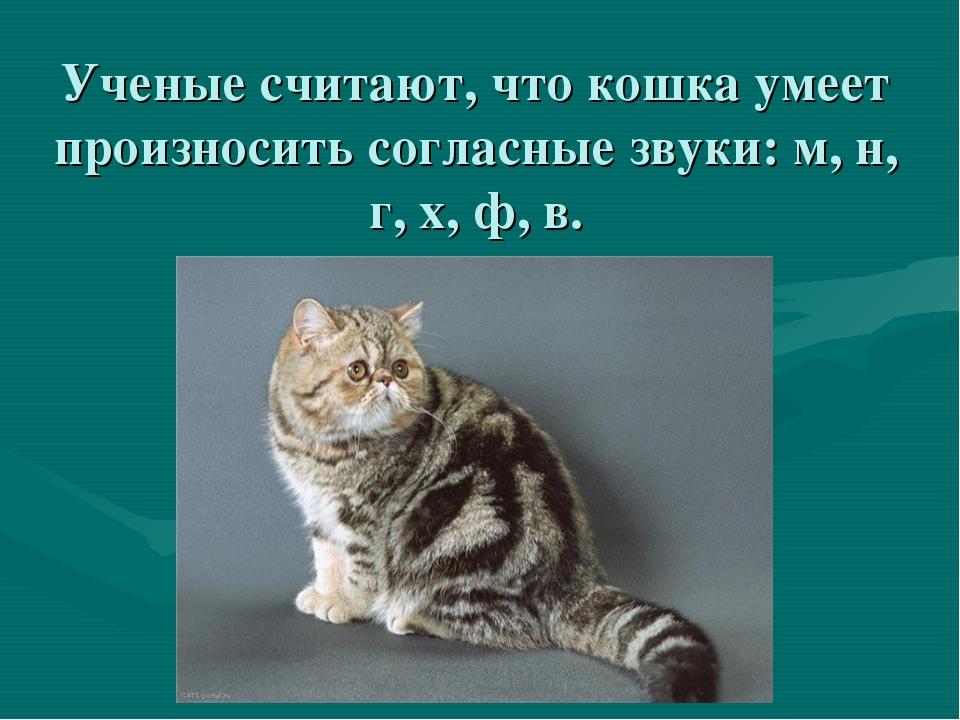 Ученые считают, что кошка умеет произносить согласные звуки: м, н, г, х, ф, в.