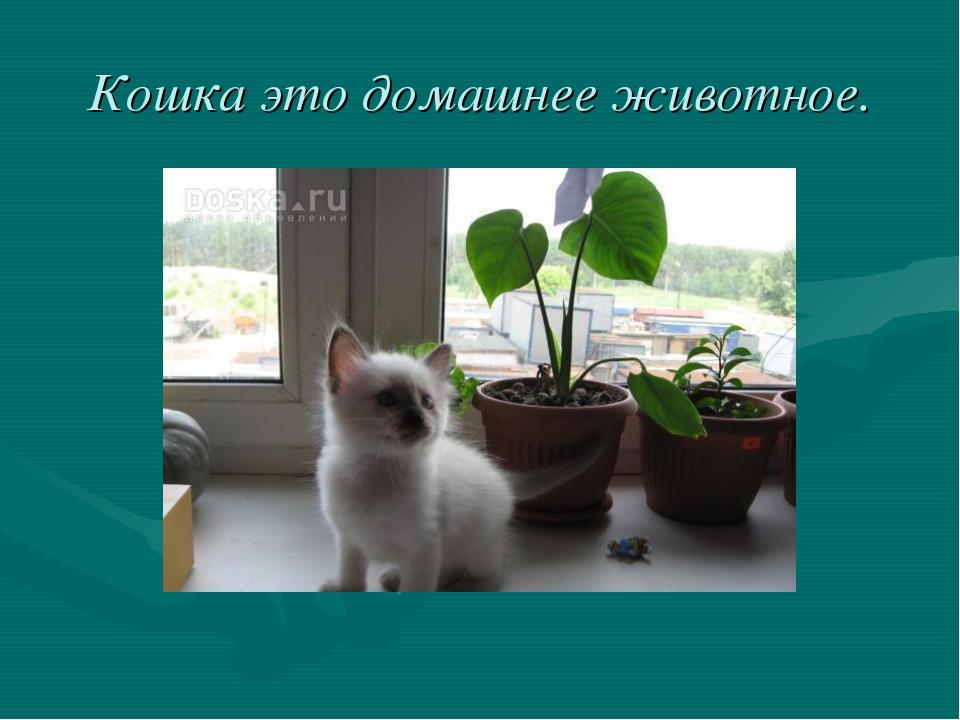 Кошка это домашнее животное.