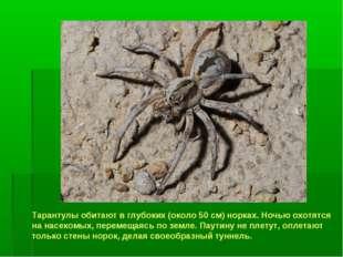 Тарантулы обитают в глубоких (около 50 см) норках. Ночью охотятся на насекомы