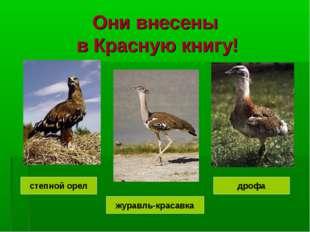 Они внесены в Красную книгу! журавль-красавка дрофа степной орел