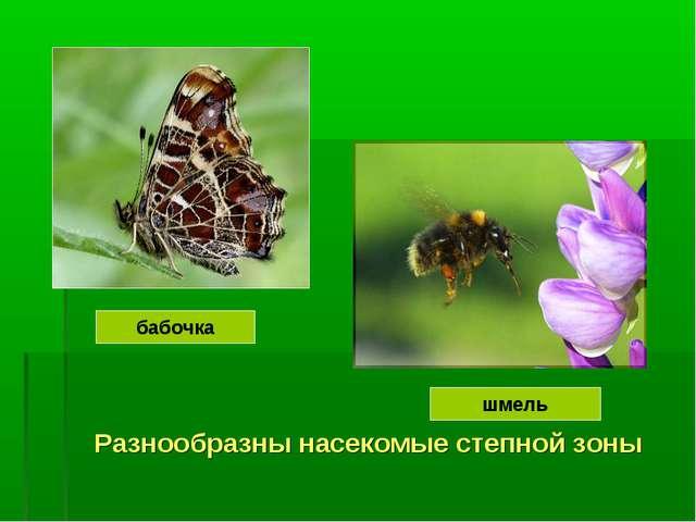 Разнообразны насекомые степной зоны бабочка шмель