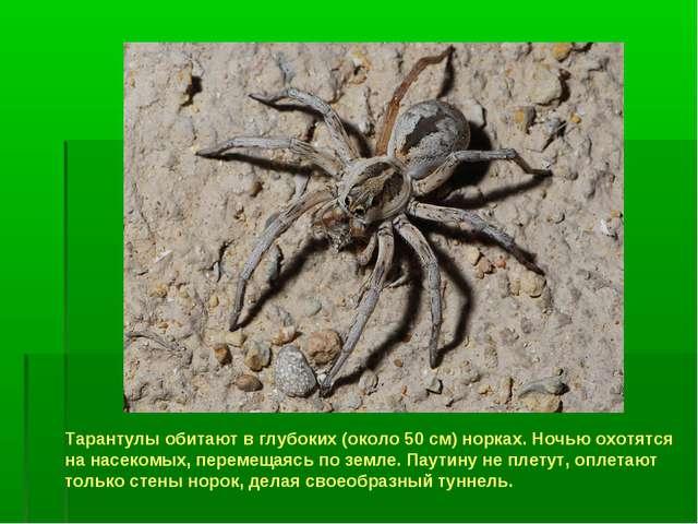 Тарантулы обитают в глубоких (около 50 см) норках. Ночью охотятся на насекомы...