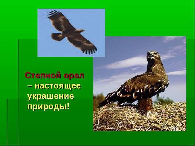 Степной орел – настоящее украшение природы!