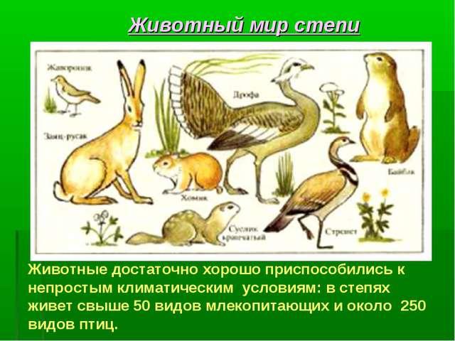 Животные достаточно хорошо приспособились к непростым климатическим условиям:...