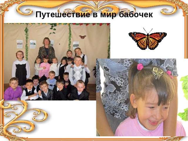 Путешествие в мир бабочек