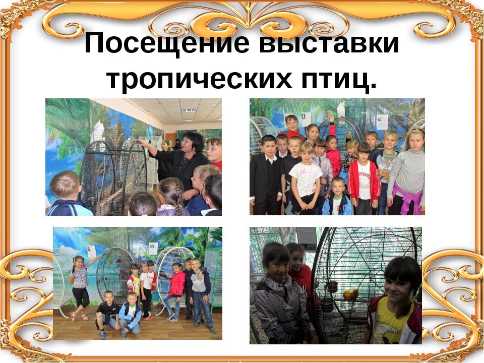 Посещение выставки тропических птиц.