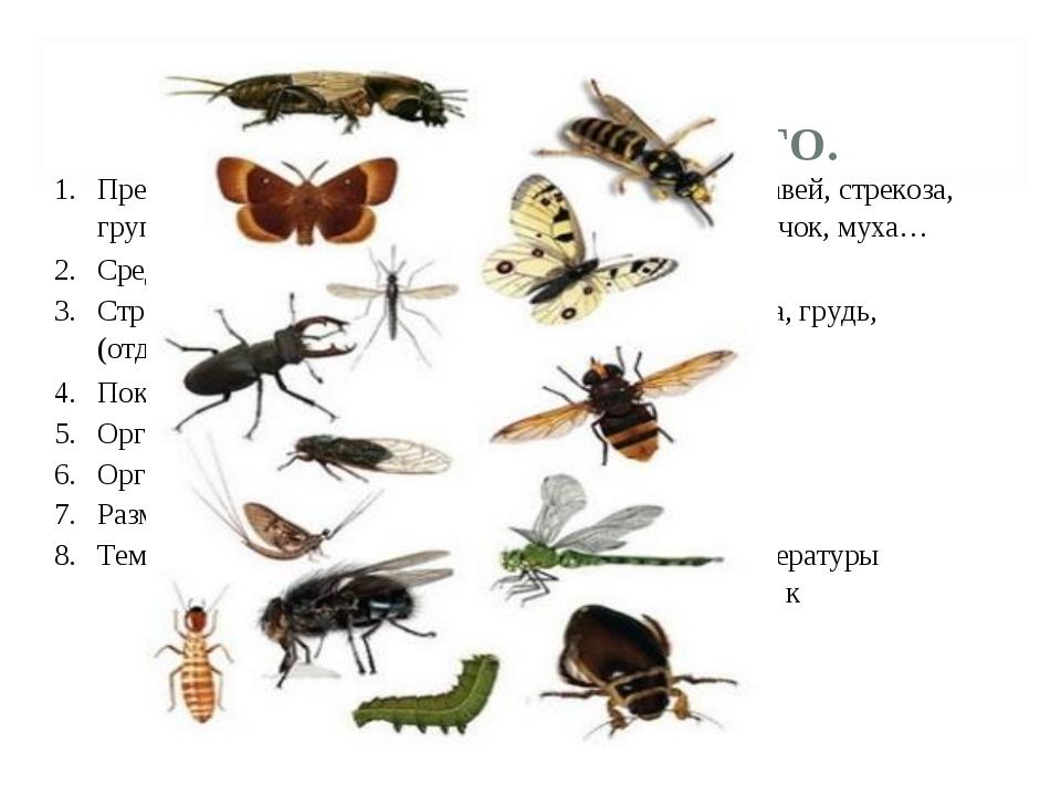 ПАСПОРТ НАСЕКОМОГО. 1.Представители группы.Кузнечик, бабочка, пчела, мура...