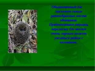 Обыкновенный ёж населяет самые разнообразные места обитания. Предпочитает опу