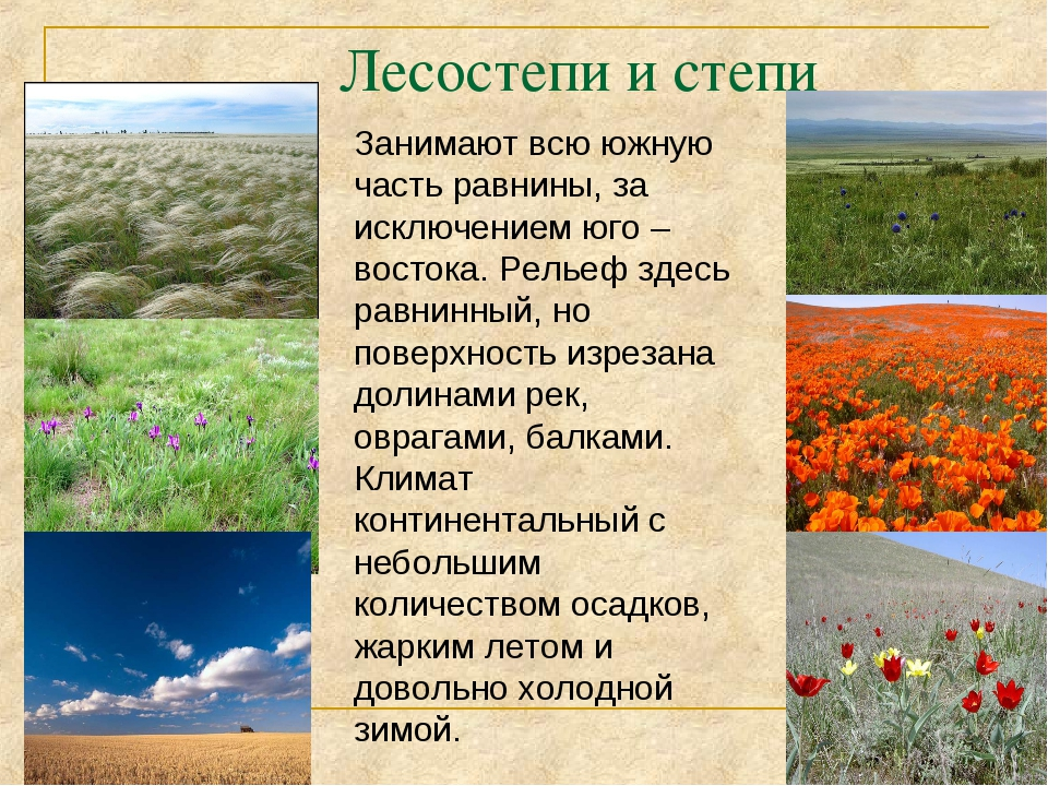 Лесостепи и степи Занимают всю южную часть равнины, за исключением юго – вост...