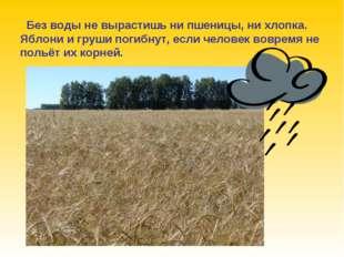 Без воды не вырастишь ни пшеницы, ни хлопка. Яблони и груши погибнут, если ч