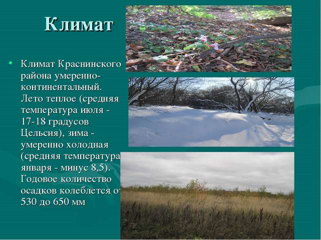 Климат Климат Краснинского района умеренно-континентальный. Лето теплое (сред...
