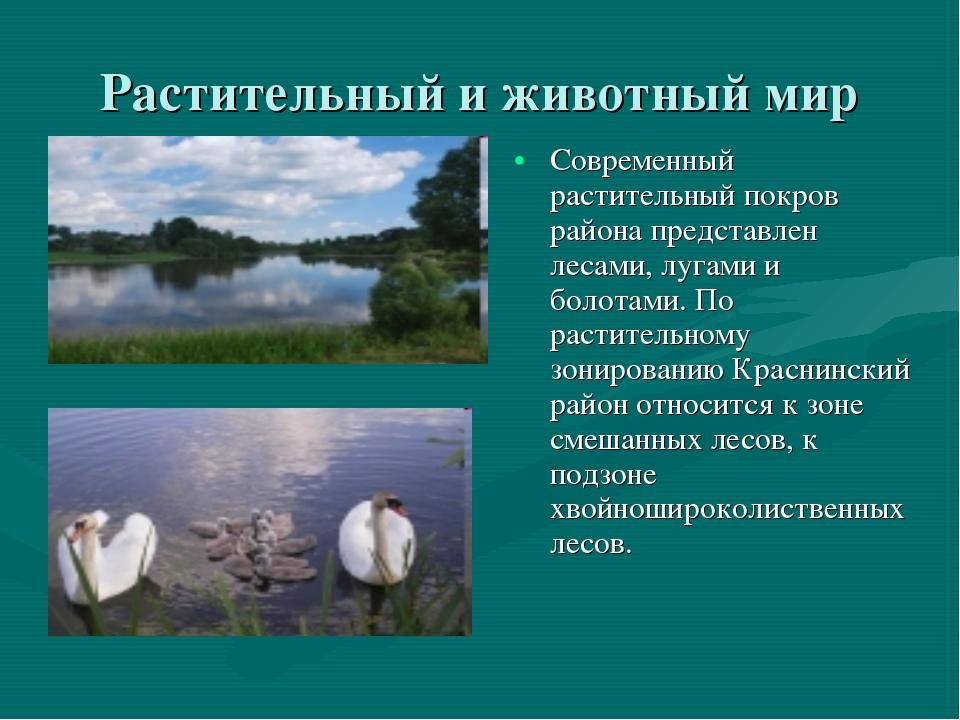Растительный и животный мир Современный растительный покров района представле...