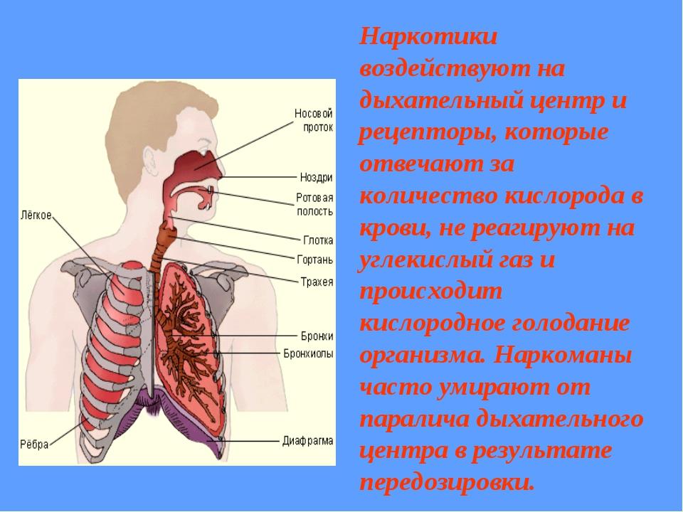 Наркотики воздействуют на дыхательный центр и рецепторы, которые отвечают за...