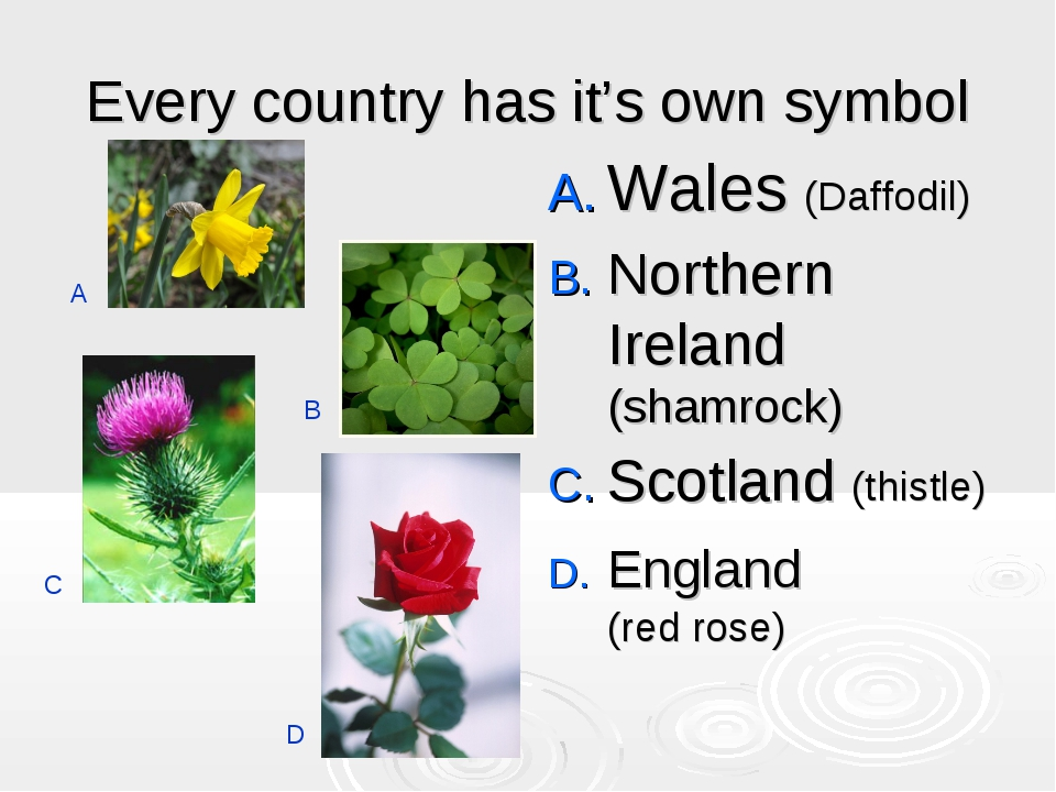 Every country has it's own symbol Wales (Daffodil) Northern Ireland (shamrock...