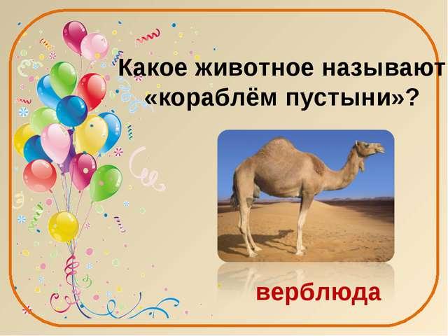Какое животное называют «кораблём пустыни»? верблюда