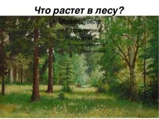 Что растет в лесу?