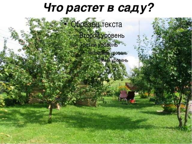 Что растет в саду?
