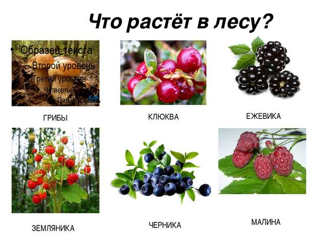 Что растёт в лесу?
