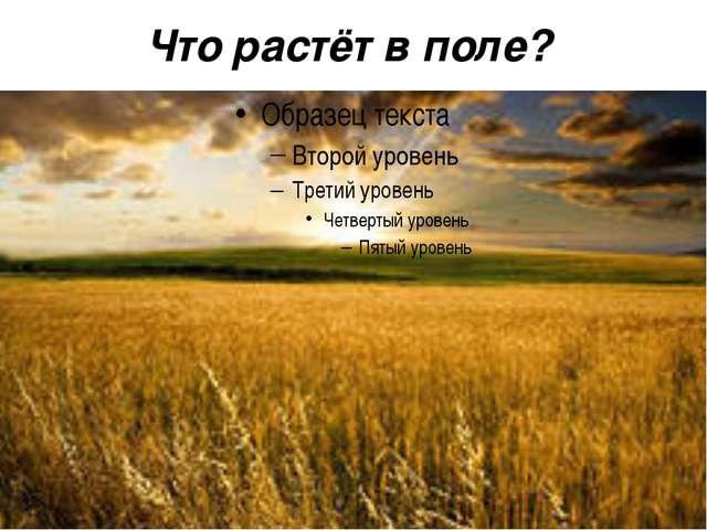 Что растёт в поле?