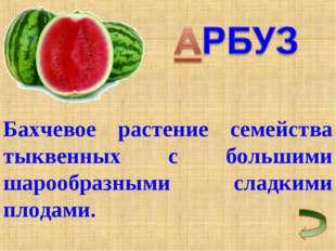 Бахчевое растение семейства тыквенных с большими шарообразными сладкими плода