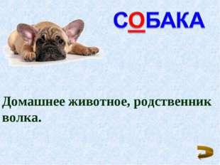 Домашнее животное, родственник волка.