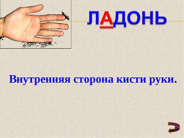 Внутренняя сторона кисти руки.