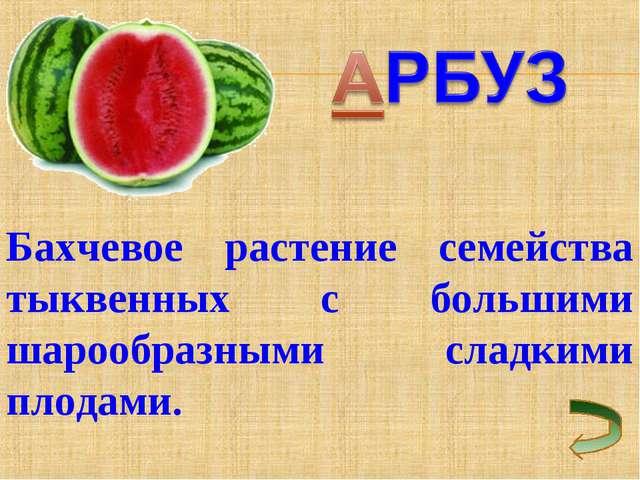 Бахчевое растение семейства тыквенных с большими шарообразными сладкими плода...