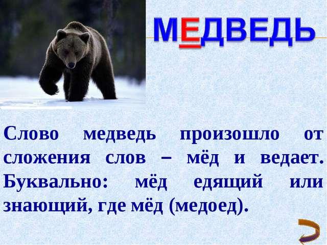 Слово медведь произошло от сложения слов – мёд и ведает. Буквально: мёд едящи...