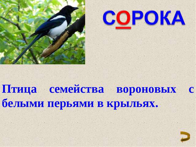 Птица семейства вороновых с белыми перьями в крыльях.