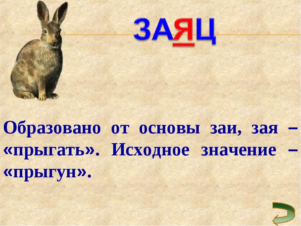 Образовано от основы заи, зая – «прыгать». Исходное значение – «прыгун».
