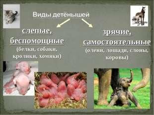 слепые, беспомощные (белки, собаки, кролики, хомяки) зрячие, самостоятельные