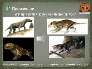 от древних пресмыкающихся предки млекопитающих первые млекопитающие