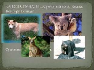 Сумчатая кошка, опоссум и т.д.