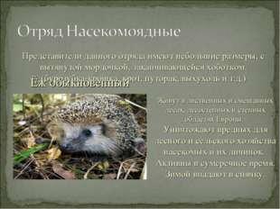 Ёж обыкновенный Живут в лиственных и смешанных лесах, лесостепных и степных о