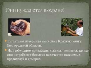 Гигантская вечерница занесена в Красную книгу Белгородской области. Их необхо