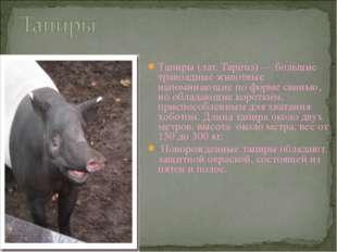 Тапиры (лат. Tapirus) — большие травоядные животные напоминающие по форме сви
