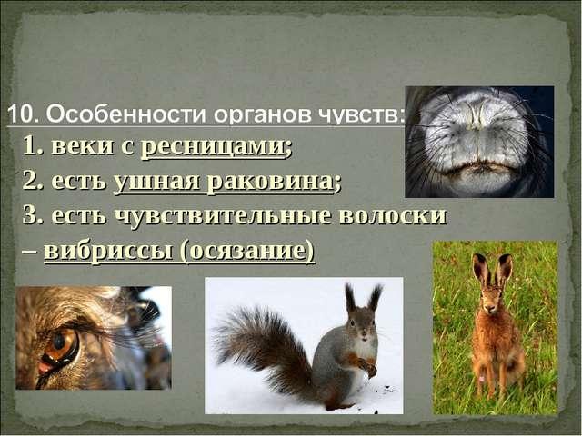 1. веки с ресницами; 2. есть ушная раковина; 3. есть чувствительные волоски –...