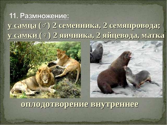 оплодотворение внутреннее у самца (♂) 2 семенника, 2 семяпровода; у самки (♀)...