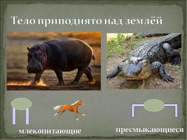 млекопитающие пресмыкающиеся