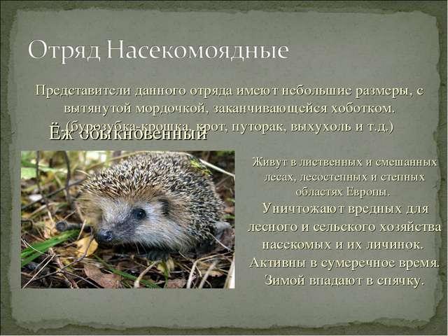 Ёж обыкновенный Живут в лиственных и смешанных лесах, лесостепных и степных о...