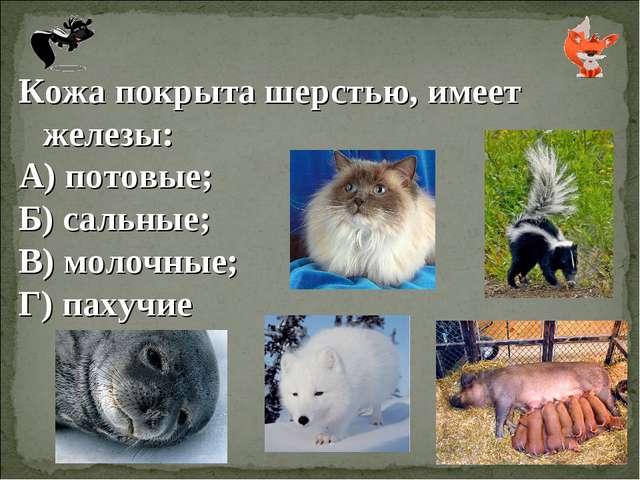 Кожа покрыта шерстью, имеет железы: А) потовые; Б) сальные; В) молочные; Г) п...