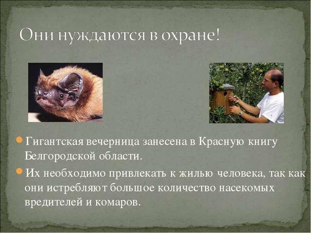 Гигантская вечерница занесена в Красную книгу Белгородской области. Их необхо...