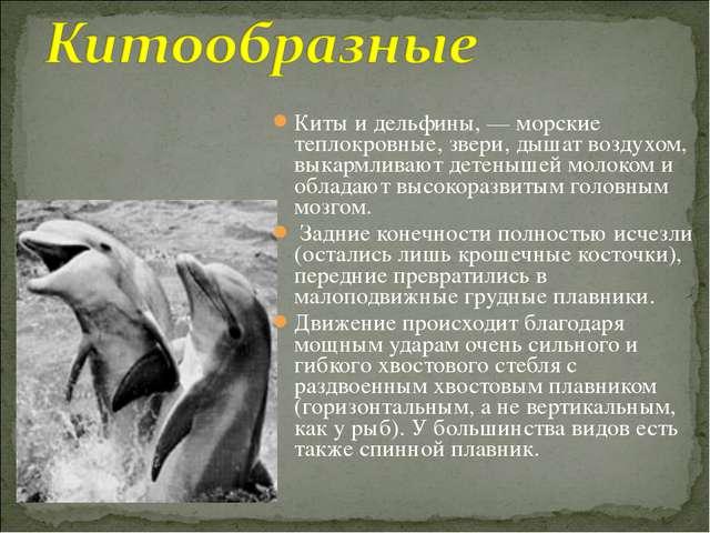 Киты и дельфины, — морские теплокровные, звери, дышат воздухом, выкармливают...