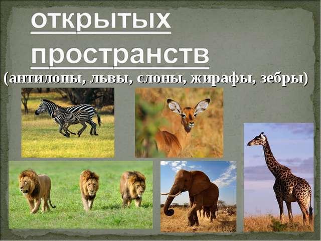 (антилопы, львы, слоны, жирафы, зебры)